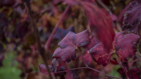 Un pomeriggio di autunno