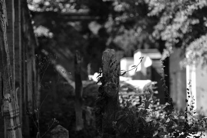 IL cimitero monumentale- Modena